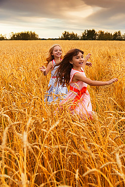 Two young girls running in a golden wheat field; Alberta, Canada
