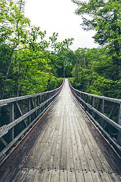 Lush green trees lining the trail in Canyon des Portes de l'Enfer; Saint-Narcisse-de-Rimouski, Quebec, Canada