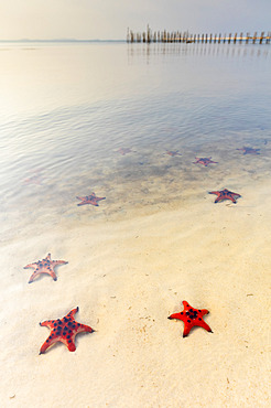 Starfish Beach with red starfish on the white sand in the shallow water along the coast; Phu Quoc, Vietnam