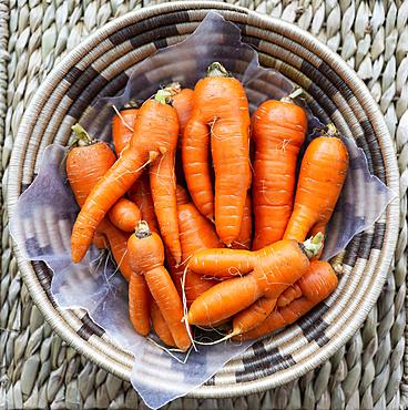 Woven basket full of fresh carrots; Studio