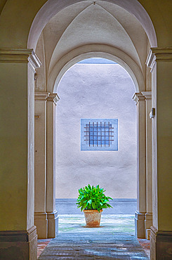 Vaulted arched doorway with a terracotta planter and green leafed plant sitting on the tiled walkway in Cortona; Arezzo, Tuscany, Italy