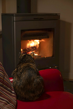 A cat sits on the chair and enjoys the heat of a fireplace; Haines Junction, Yukon, Canada