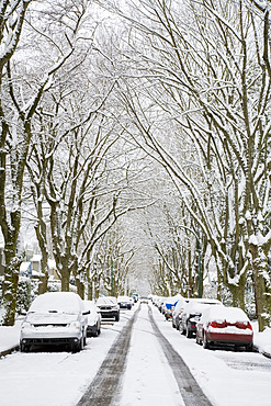 Winter, West Point Grey, Vancouver, British Columbia, Canada