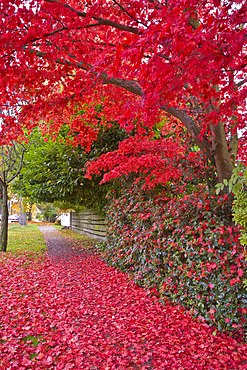 14th Avenue, West Point Grey, Vancouver, British Columbia, Canada