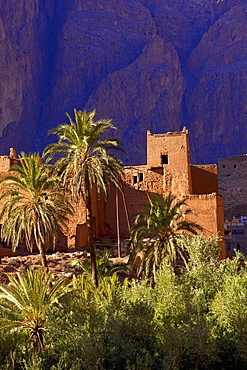 Road to Todra Gorge with oasis, Tinghir, Morocco, North Africa, Africa