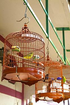 Yuen Po Street Bird Garden, Hong Kong, China, Asia