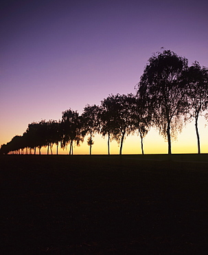Tree avenue at sunset, Hohenlohe, Baden Wurttemberg, Germany, Europe