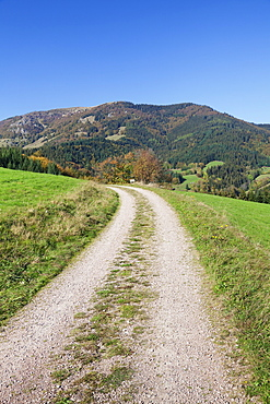 Path leading to Belchen Mountain, Black Forest, Baden Wurttemberg, Germany, Europe