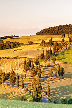 Road liend with cypresses, Monticchiello, Val d'Orcia (Orcia Valley), UNESCO World Heritage Site, Siena Province, Tuscany, Italy, Europe