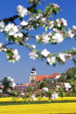 Tree blossom and rape fields in spring, Stiftskirche church, Herrenberg, Baden-Wurttemberg, Germany, Europe