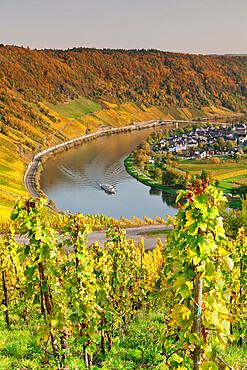 Loop of Moselle River near the town of Kroev, Rhineland-Palatinate, Germany, Europe