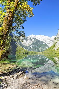 Watzmann Mountain reflecting in Lake Obersee, near lake Koenigssee, Berchtesgadener Land, Berchtesgaden National Park, Upper Bavaria, Bavaria, German, Europe