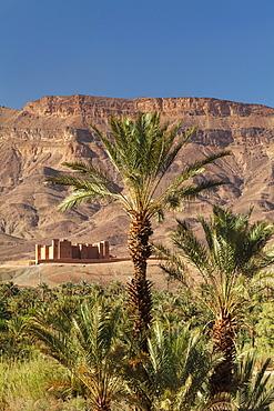 Tamnougalt Kasbah, Draa Valley, Atlas Mountains, Morocco, North Africa, Africa