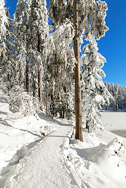 Mummelsee Lake in winter, Black Forest, Baden Wurttemberg, Germany, Europe
