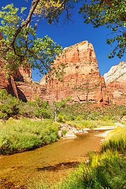 Virgin River und Angel's Landing, Zion National Park, Colorado Plateau, Utah, United States of America, North America