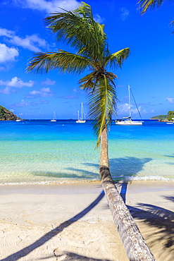 Stunning Saltwhistle Bay, yachts, white sand beach, blue sea, overhanging palm trees, Mayreau, Grenadines, St. Vincent and The Grenadines, Windward Islands, West Indies, Caribbean, Central America