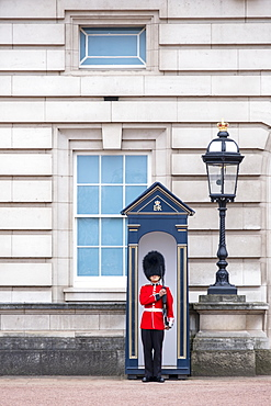 A royal guard outside Buckingham Palace, official residence of the Queen in Central London, London, England, United Kingdom, Europe