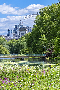 Spring flowers in the royal park with the London Eye and buildings on Whitehall, St. James's Park, Westminster, London, England, United Kingdom, Europe