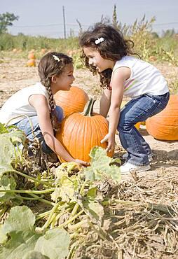 Hispanic sisters picking up pumpkin