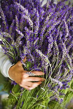 Asian woman holding bunch of lavender flowers