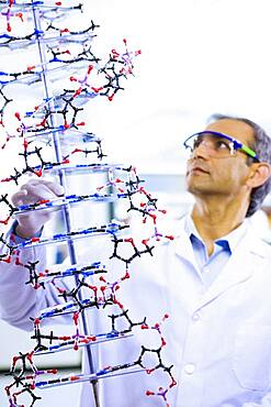 Indian male scientist holding DNA model