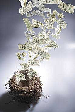 Dollar bills leaving nest