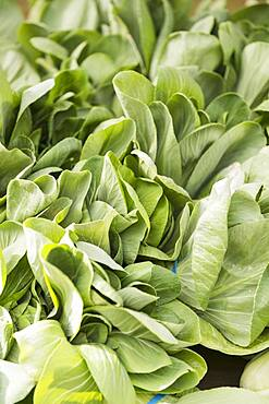Close up of bunches of fresh lettuce