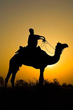 Silhouette of man riding camel at sunrise