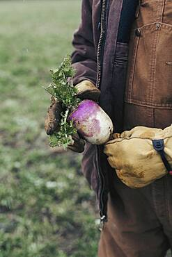 Caucasian farmer holding fresh beet