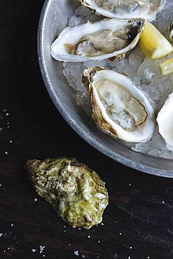 Close up of oysters and lemon on ice
