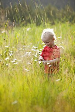 Caucasian boy admiring flowers in tall grass