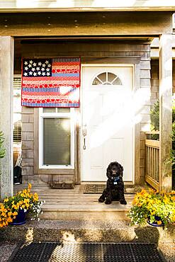 Dog sitting on front porch