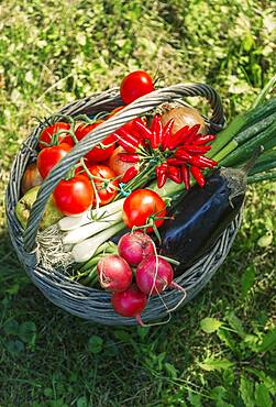 High angle view of basket of vegetables