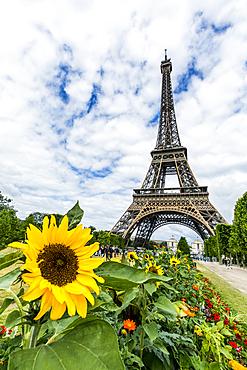 Row of flowers near Eiffel Tower, Paris, Ile de France, France