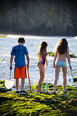 Caucasian boy and girls exploring tide pools with nets
