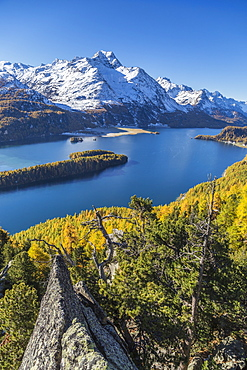 Lake Sils and Piz la Margna covered in snow from a rocky terrace above the Engadine woods near St. Moritz, Graubunden, Swiss Alps, Switzerland, Europe