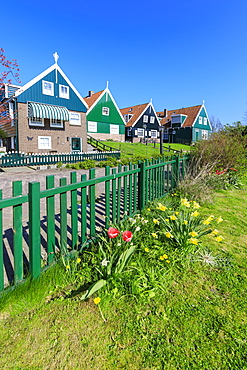 Typical wooden houses framed by meadows and flowers in the village of Marken, Waterland, North Holland, The Netherlands, Europe