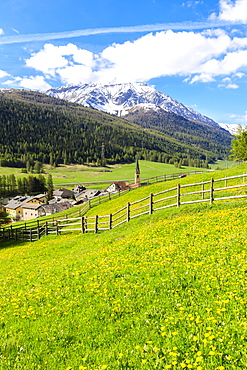 Alpine village of S-chanf surrounded by green meadows in spring, Canton of Graubunden, Maloja Region, Switzerland, Europe