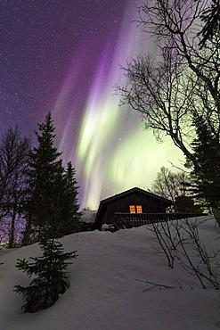 Northern Lights (Aurora borealis) over wood hut, Grovfjord, Troms county, Lofoten Islands, Nordland, Norway, Europe