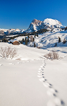 Snow shoe hiking is a great way of exploring the sunny Seiser Alm hiking paradise at Europe's largest high alp, South Tyrol, Italy, Europe