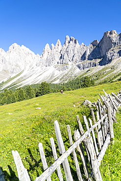 Wood fence in the green pastures of Malga Brogles with the Odle in background, Val di Funes, South Tyrol, Dolomites, Italy, Europe