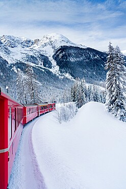 Red Bernina Express train crossing the snowy landscape in winter, Preda Bergun, Albula Valley, Graubunden Canton, Switzerland, Europe