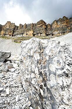 Marine fossils on rocks at the geological area Orti della Regina, Brenta Dolomites, Madonna di Campiglio, Trentino, Italy, Europe