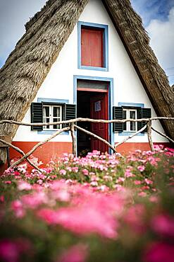 Traditional thatched house in the flowering meadows, Santana, Madeira island, Portugal, Atlantic, Europe