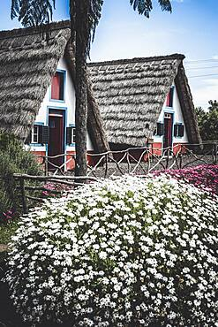 Historic rural houses surrounded by flowers, Santana, Madeira island, Portugal, Atlantic, Europe