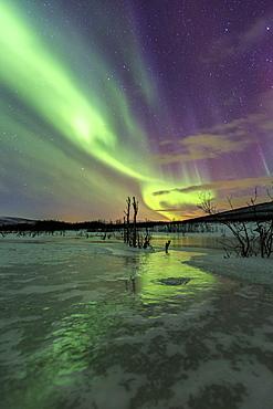 Aurora Borealis on the frozen lagoon of Jaegervatnet, Stortind, Lyngen Alps, Troms, Lapland, Norway, Scandinavia, Europe - 1179-888