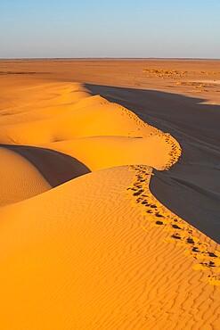 Sand dunes at sunrise, Djado Plateau, Sahara, Niger, Africa