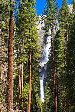Yosemite Falls, Yosemite National Park, UNESCO World Heritage Site, California, United States of America, North America