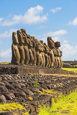 Moai heads of Easter Island, Rapa Nui National Park, UNESCO World Heritage Site, Easter Island, Chile, South America