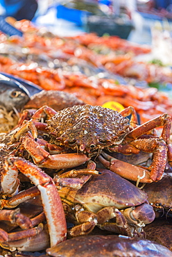 Crabs at the fish market, Aix en Provence, Bouches du Rhone, Provence, Provence-Alpes-Cote d'Azur, France, Europe